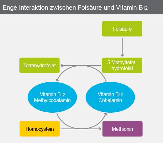 Enge Interaktion zwischen Folsäure und Vitamin B12