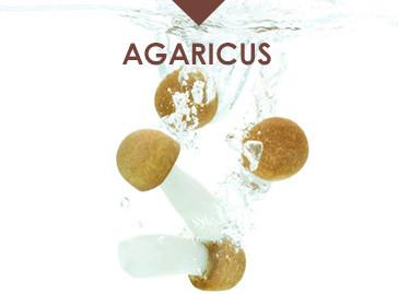 Hawlik Gesundheitsprodukte Agaricus