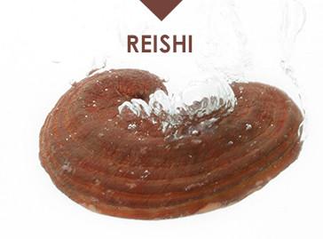 Hawlik Gesundheitsprodukte Reishi