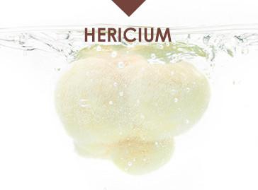 Hawlik Gesundheitsprodukte Hericium